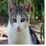"""Un des chats de """"Le rideau"""""""